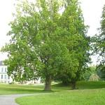 I6192-Schloss Wilhelmsthal