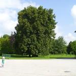 I6229-Schloss Wilhelmsthal