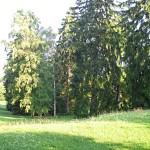 I6301-Schloss Wilhelmsthal